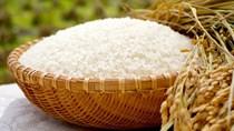 Giá gạo ngày 21/8/2020 trong xu hướng tăng