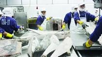 Xuất khẩu cá ngừ sang EU tăng đột biến