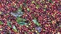 Nông nghiệp xuất siêu hơn 6 tỷ USD