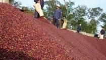 """Hưởng lợi từ EVFTA, nông sản tỷ USD """"tấp nập"""" xuất khẩu vào EU"""