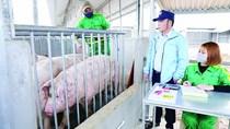 Eò uột xuất khẩu sản phẩm chăn nuôi