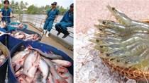 Tổng quan thị trường thủy sản tháng 8/2020