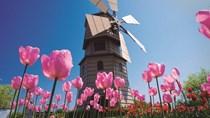 Máy vi tính, điện tử dẫn đầu nhóm hàng xuất khẩu sang Hà Lan 9 tháng