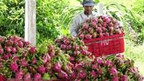 Hợp tác phát triển nông nghiệp trong bối cảnh dịch COVID-19