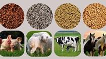 Xuất khẩu thức ăn chăn nuôi 11 tháng năm 2020 tăng 14%