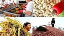 Nhiều tín hiệu vui từ thị trường nông sản