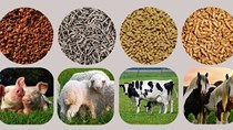 Nhập khẩu thức ăn gia súc 2 tháng đầu năm 2021 tăng 38%