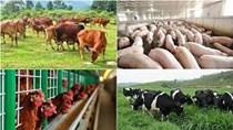TT 24/2021/TT-BTC quy định thu, nộp, quản lý và sử dụng phí trong chăn nuôi