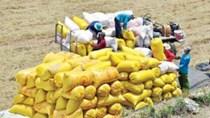 80.000 tấn gạo xuất theo hạn ngạch của EVFTA có hiệu lực từ 2022