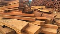Thông tin nhập khẩu gỗ xây dựng 6 tháng đầu năm 2021 và dự báo