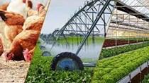 Hà Nội sản xuất nông nghiệp ổn định, dư thừa thịt gia cầm