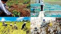 Khẩn trương tháo gỡ những khó khăn để duy trì sản xuất nông nghiệp