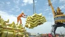 Thông tin thị trường Gạo thế giới tháng 7, 7 tháng đầu năm 2021: Phân tích và dự báo