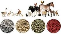 Đứng đầu ASEAN về thức ăn chăn nuôi, Việt Nam vẫn chi hàng tỷ USD nhập khẩu