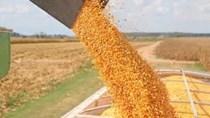 Phân tích thị trường thức ăn chăn nuôi thế giới 7 tháng đầu năm 2021 và triển vọng