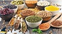 FAO hạ dự báo sản lượng và dự trữ ngũ cốc thế giới năm 2021/22