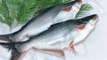 Cơ hội lớn cho xuất khẩu cá tra