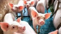 Giá heo hơi ngày 11/10/2021: Đề xuất hạn chế nhập khẩu thịt heo