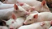 Xuất khẩu thịt lợn của Brazil trong tháng 9/2021 đạt mức cao kỷ lục