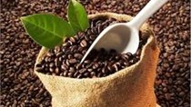 Giá cà phê kỳ hạn tại NYBOT sáng ngày 17/1/2017