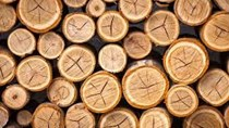 Giá gỗ xẻ tại CME sáng ngày  14/6/2017
