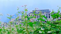 Tháng 10 tới Sa Pa ngắm hoa tam giác mạch