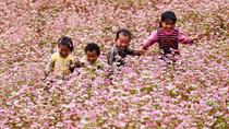 Những địa điểm ngắm hoa tam giác mạch đẹp nhất Hà Giang