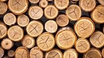Giá gỗ xẻ tại CME sáng ngày  23/10/2017
