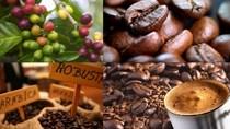 Giá cà phê kỳ hạn tại NYBOT sáng ngày 22/12/2017