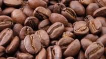 Giá cà phê trong nước giảm 500 nghìn đồng/tấn
