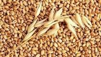 Thị trường NL TĂCN thế giới ngày 1/1/2019: Lúa mì giảm