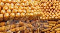 USDA: Dự báo cung cầu ngô thế giới  niên vụ 2018/19
