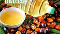 Giá dầu cọ giảm do giá dầu thực vật suy yếu