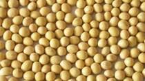Thị trường TĂCN thế giới ngày 27/12/2019: Giá đậu tương tăng