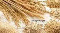 Giá lúa mì Nga tăng do đồng RUB duy trì vững