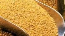 USDA: Dự báo cung cầu khô đậu tương thế giới niên vụ 2019/20