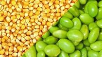 Thị trường TĂCN thế giới ngày 22/7/2020: Giá ngô và đậu tương hồi phục