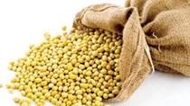 Thị trường TĂCN thế giới ngày 3/11/2020: Giá đậu tương tăng