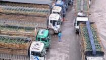Xây khu trung chuyển hàng hóa tại Lạng Sơn, Cao Bằng