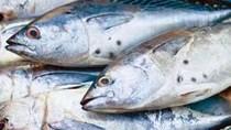 Philippines: Sản lượng khai thác cá ngừ tại General Santos đạt mức kỷ lục trong 6 năm trở lại đây