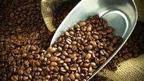 Thị trường cà phê ngày 21/01/2015