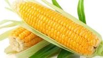 Nhật Bản tăng mạnh sử dụng ngô trong thức ăn chăn nuôi