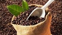 Thị trường cà phê ngày 12/6: giảm mạnh 600 đồng/kg
