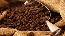 Giá cà phê Tây Nguyên xuống 39,4 triệu đồng/tấn