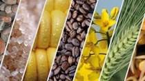 Hàng hóa thế giới tuần tới 24/5: Dầu và vàng tăng, cà phê giảm