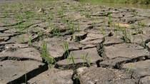 Thái Lan khuyến cáo nông dân nên hoãn trồng lúa mùa mưa