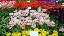 Nhiều loại hoa tươi Đà Lạt tăng giá mạnh trong dịp lễ 20/10
