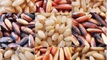 Dự báo giá gạo Thái Lan sẽ giảm hơn nữa