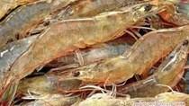 Thủy sản ngày 12/5: Giá tôm nguyên liệu giảm,  sản lượng cá ngừ đại dương tăng
