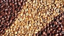 Macquarie: Giá cà phê arabica tiếp tục giảm trong năm 2015